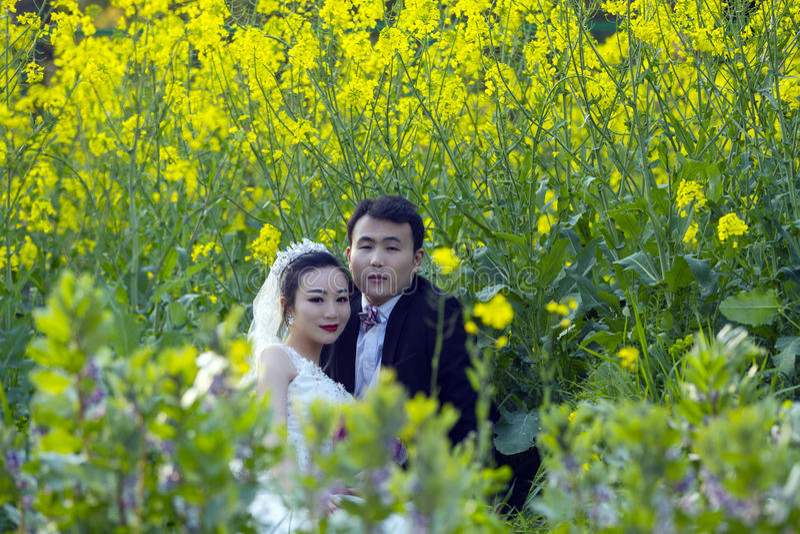 Κινεζικός γάμος ζευγών portraint στον τομέα λουλουδιών λάχανων στοκ φωτογραφίες