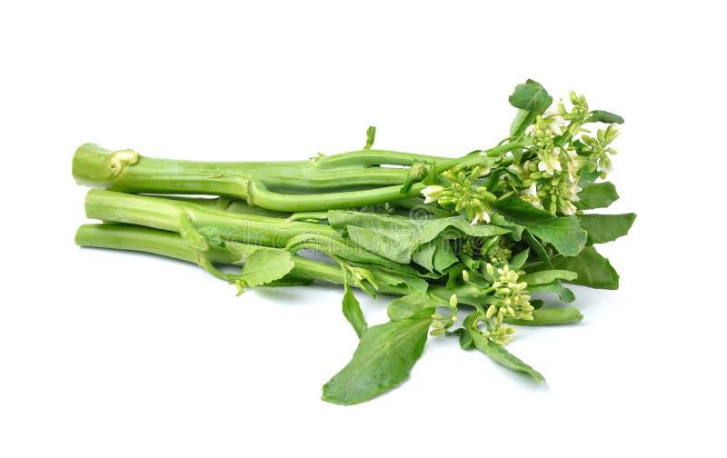 Κινεζικό λαχανικό κατσαρού λάχανου στο άσπρο υπόβαθρο στοκ εικόνες με δικαίωμα ελεύθερης χρήσης