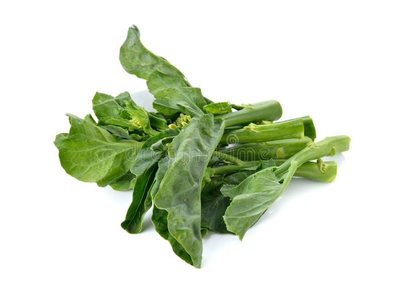 Κινεζικό κατσαρό λάχανο στο άσπρο υπόβαθρο στοκ φωτογραφία με δικαίωμα ελεύθερης χρήσης