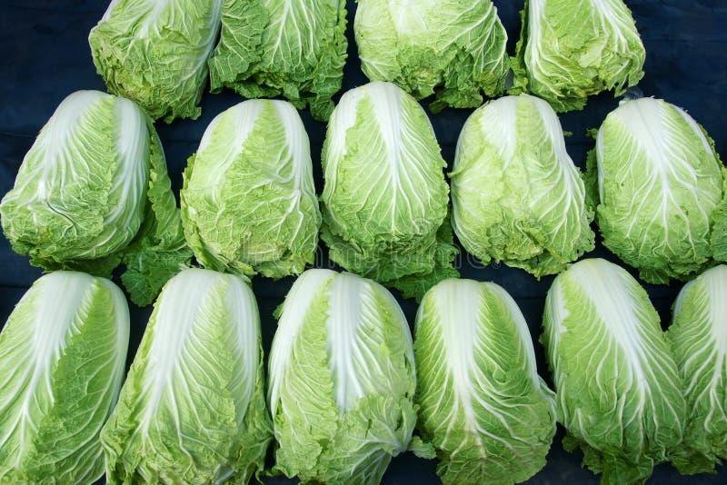 Κινεζικό λάχανο στοκ εικόνα