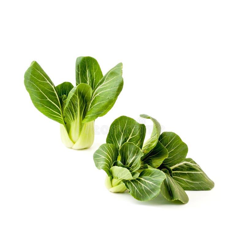 Κινεζικό λάχανο pak-Choi σαλάτας δύο δεσμών φρέσκο πράσινο σε ένα CL στοκ εικόνα
