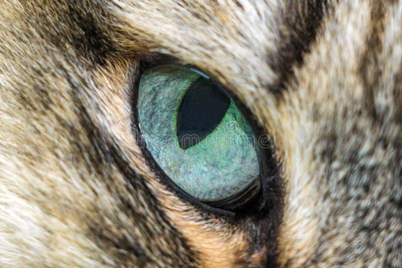 Κινηματογράφηση σε πρώτο πλάνο γατών μπλε ματιών στοκ φωτογραφίες