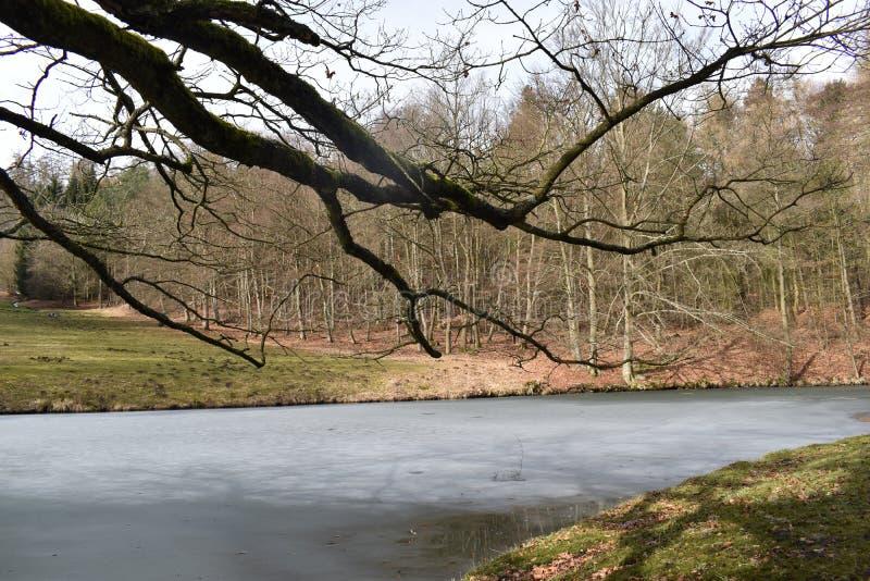 Κινηματογράφηση σε πρώτο πλάνο ενός μεγάλου κλαδίσκου που κρεμά πέρα από μια παγωμένη λίμνη στοκ εικόνες