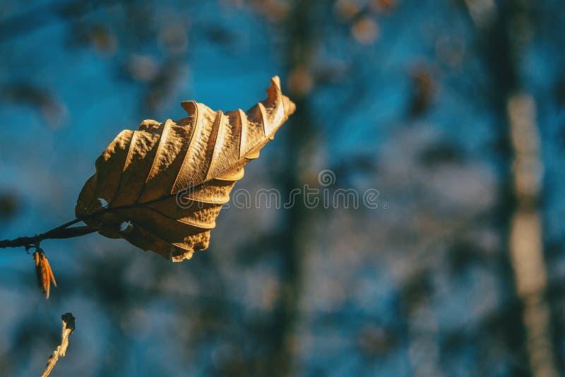 Κινηματογράφηση σε πρώτο πλάνο ενός ξηρού φθινοπωρινού φύλλου στοκ εικόνες