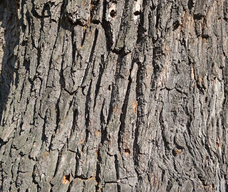 Κινηματογράφηση σε πρώτο πλάνο ενός παλαιού δρύινου κορμού δέντρων στοκ εικόνες