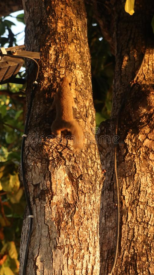 Κινηματογράφηση σε πρώτο πλάνο ενός σκιούρου σε ένα δέντρο μια ηλιόλουστη ημέρα με το θολωμένο φυσικό υπόβαθρο στοκ φωτογραφίες με δικαίωμα ελεύθερης χρήσης