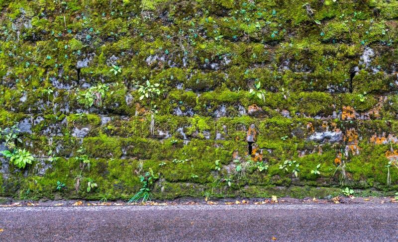 Κινηματογράφηση σε πρώτο πλάνο ενός τοίχου με το βρύο 3 στοκ εικόνες με δικαίωμα ελεύθερης χρήσης