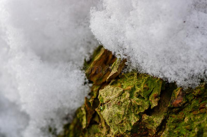 Κινηματογράφηση σε πρώτο πλάνο ενός φλοιού δέντρων που καλύπτεται με το χιόνι, στενό βάθος του τομέα στοκ εικόνες με δικαίωμα ελεύθερης χρήσης