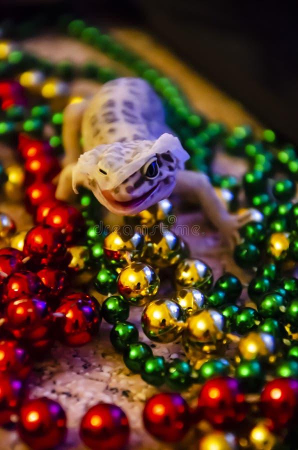 Κινηματογράφηση σε πρώτο πλάνο ενός gecko λεοπαρδάλεων που ρίχνει στη Παραμονή Πρωτοχρονιάς Αρχίζουμε το νέο έτος σε ένα νέο δέρμ στοκ φωτογραφία με δικαίωμα ελεύθερης χρήσης