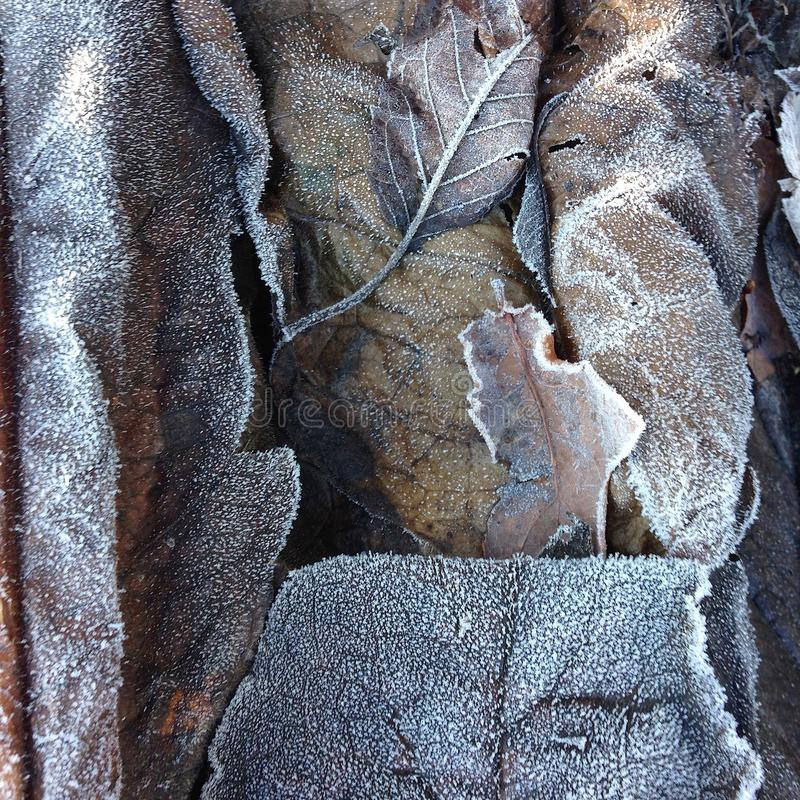 Κινηματογράφηση σε πρώτο πλάνο και λεπτομέρεια σε έναν σωρό των παγωμένων νεκρών φύλλων σε ένα δασικό χαμόκλαδο το χειμώνα στοκ φωτογραφία με δικαίωμα ελεύθερης χρήσης