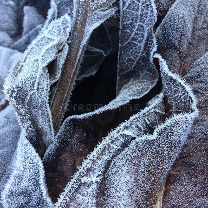 Κινηματογράφηση σε πρώτο πλάνο και λεπτομέρεια σε έναν σωρό των παγωμένων νεκρών φύλλων σε ένα δασικό χαμόκλαδο το χειμώνα στοκ εικόνα με δικαίωμα ελεύθερης χρήσης