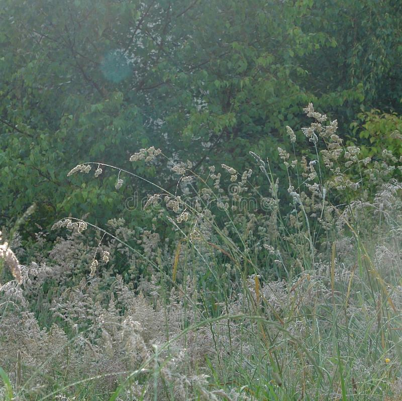 Κινηματογράφηση σε πρώτο πλάνο και λεπτομέρεια στην ψηλή χλόη σε έναν άγριο κήπο στοκ εικόνα