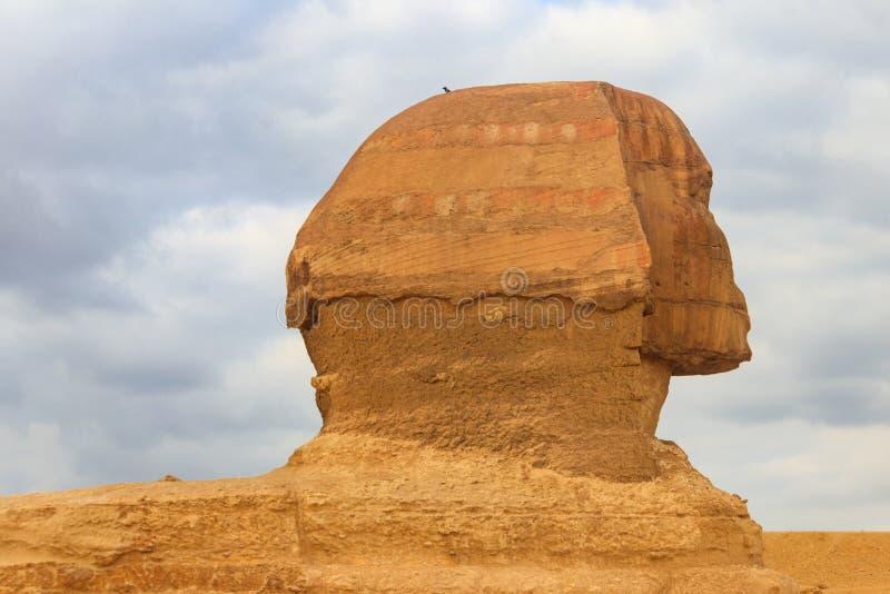 Κινηματογράφηση σε πρώτο πλάνο μεγάλου Sphinx Giza στο Κάιρο, Αίγυπτος στοκ φωτογραφία