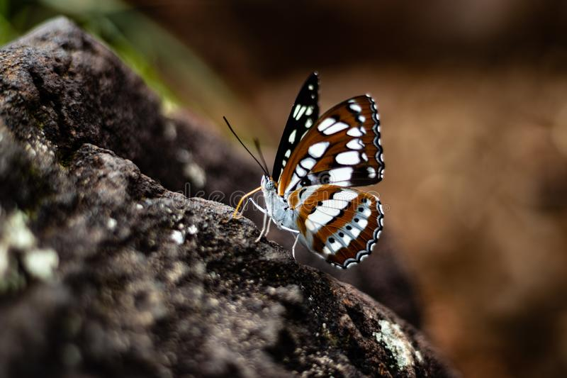 Κινηματογράφηση σε πρώτο πλάνο πεταλούδων που πυροβολείται στο βράχο στοκ εικόνες