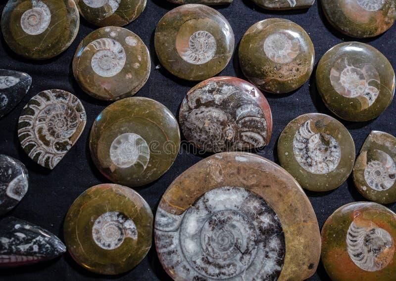 Κινηματογράφηση σε πρώτο πλάνο πολλοί ammonite προϊστορικό απολίθωμα Αρχαιολογία και paleo στοκ φωτογραφία με δικαίωμα ελεύθερης χρήσης