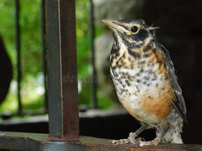 Κινηματογράφηση σε πρώτο πλάνο πουλιών και προσωπικός στοκ εικόνες με δικαίωμα ελεύθερης χρήσης