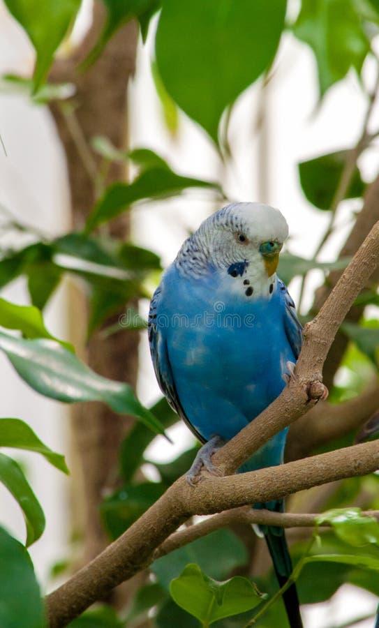 Κινηματογράφηση σε πρώτο πλάνο στο μικρό παπαγάλο στοκ φωτογραφίες