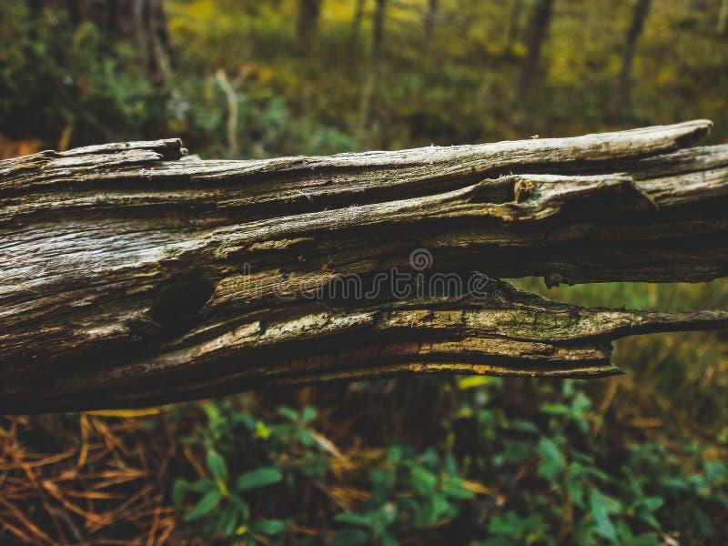 Κινηματογράφηση σε πρώτο πλάνο σύστασης Driftwood πέρα από τη δασική άποψη υποβάθρου στοκ φωτογραφία με δικαίωμα ελεύθερης χρήσης