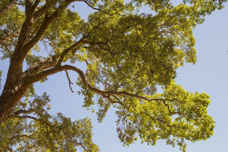 Κινηματογράφηση σε πρώτο πλάνο του κλάδου δέντρων με τα πράσινα φύλλα και του ουρανού στο backgrou στοκ εικόνα