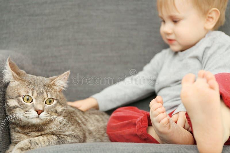 Κινηματογράφηση σε πρώτο πλάνο του λατρευτού μικρού παιδιού με τη χαριτωμένη γάτα στην γκρίζα πολυθρόνα στοκ εικόνες