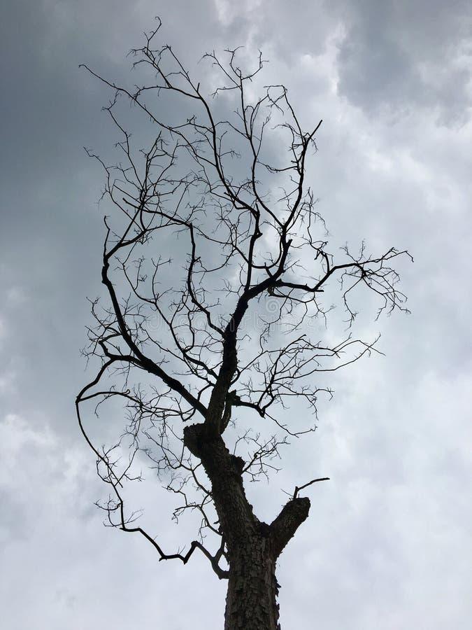 Κινηματογράφηση σε πρώτο πλάνο του νεκρού δέντρου στοκ φωτογραφία με δικαίωμα ελεύθερης χρήσης