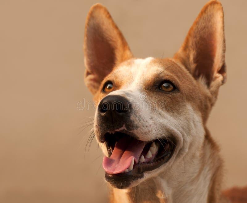 Κινηματογράφηση σε πρώτο πλάνο του σκυλιού στοκ εικόνες