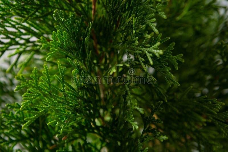 Κινηματογράφηση σε πρώτο πλάνο του χριστουγεννιάτικου δέντρου στοκ εικόνα