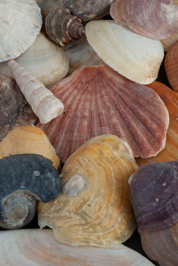 Κινηματογράφηση σε πρώτο πλάνο των θαλασσινών κοχυλιών στοκ φωτογραφίες με δικαίωμα ελεύθερης χρήσης