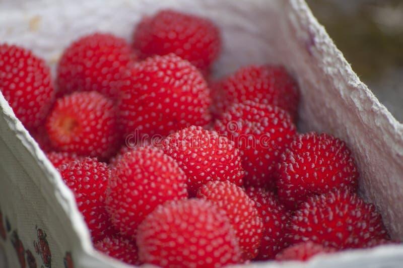 Κινηματογράφηση σε πρώτο πλάνο των κόκκινου μούρων μπαλονιών ή του σμέουρου φραουλών στοκ φωτογραφίες