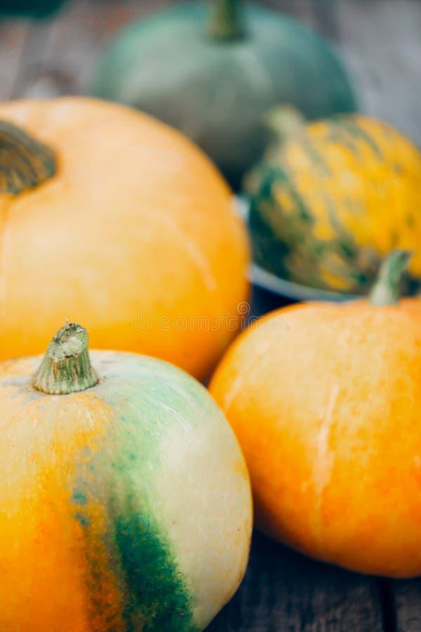 Κινηματογράφηση σε πρώτο πλάνο των πορτοκαλιών και πράσινων μεγάλων κολοκυθών Φθινόπωρο, έννοιες αποκριών στοκ φωτογραφία με δικαίωμα ελεύθερης χρήσης