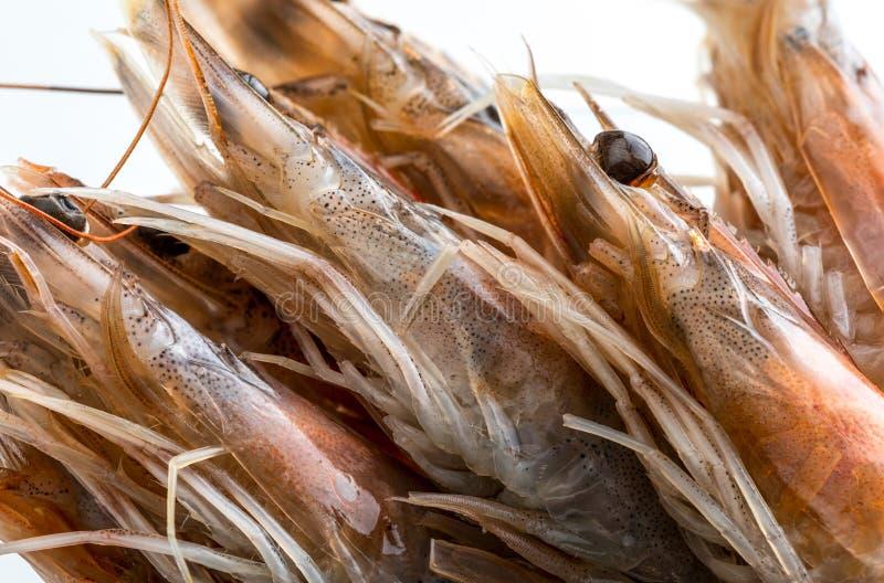 Κινηματογράφηση σε πρώτο πλάνο των φρέσκων, ακατέργαστων και ολόκληρων γαρίδων στοκ εικόνα