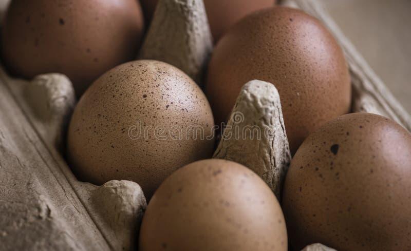 Κινηματογράφηση σε πρώτο πλάνο των φρέσκων οργανικών αυγών στοκ φωτογραφία