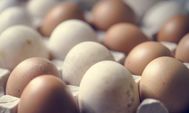 Κινηματογράφηση σε πρώτο πλάνο των φρέσκων οργανικών αυγών στοκ εικόνες