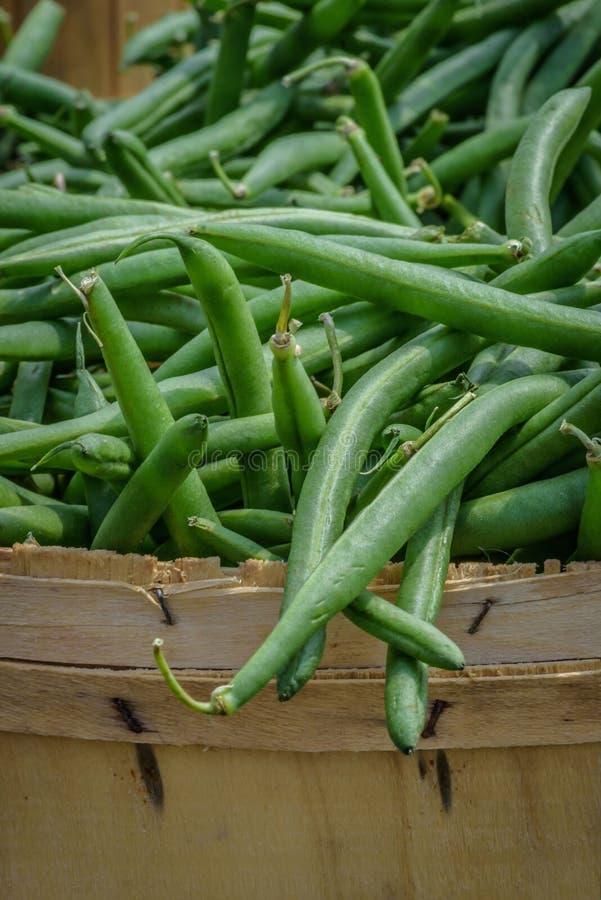Κινηματογράφηση σε πρώτο πλάνο των φρέσκων homegrown greenbeans σε ένα καλάθι μπούσελ στοκ φωτογραφία