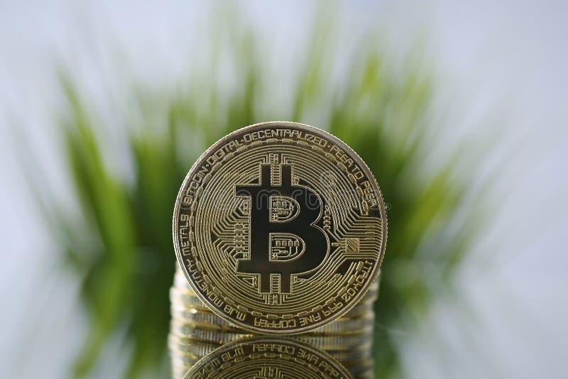 Κινηματογράφηση σε πρώτο πλάνο χρυσού Bitcoin που αντιμετωπίζει τη κάμερα αντίθετη της πράσινης χλόης Εικονικά ανώνυμα χρήματα κα στοκ εικόνες με δικαίωμα ελεύθερης χρήσης