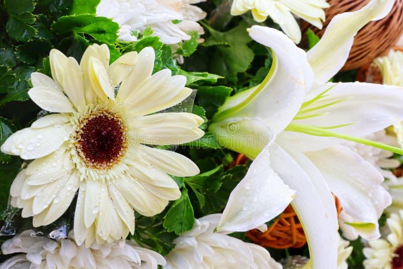 Κινηματογράφηση σε πρώτο πλάνο, όμορφη φρεσκάδα του άσπρου φυσικού υποβάθρου λουλουδιών στοκ φωτογραφία με δικαίωμα ελεύθερης χρήσης
