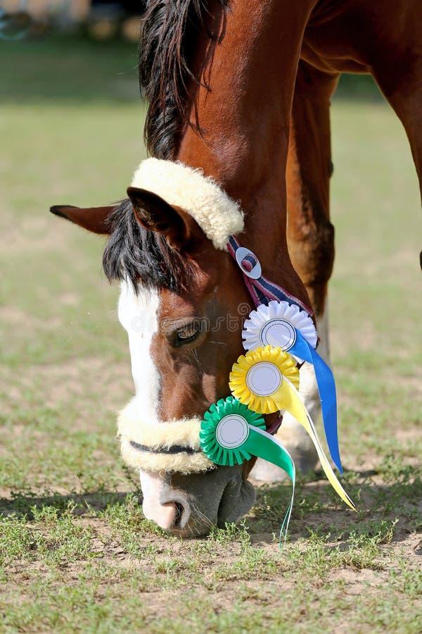 Κινηματογράφηση σε πρώτο πλάνο Headshot ενός αθλητικού αλόγου νικητών βραβείων πράσινο σε φυσικό στοκ φωτογραφία με δικαίωμα ελεύθερης χρήσης