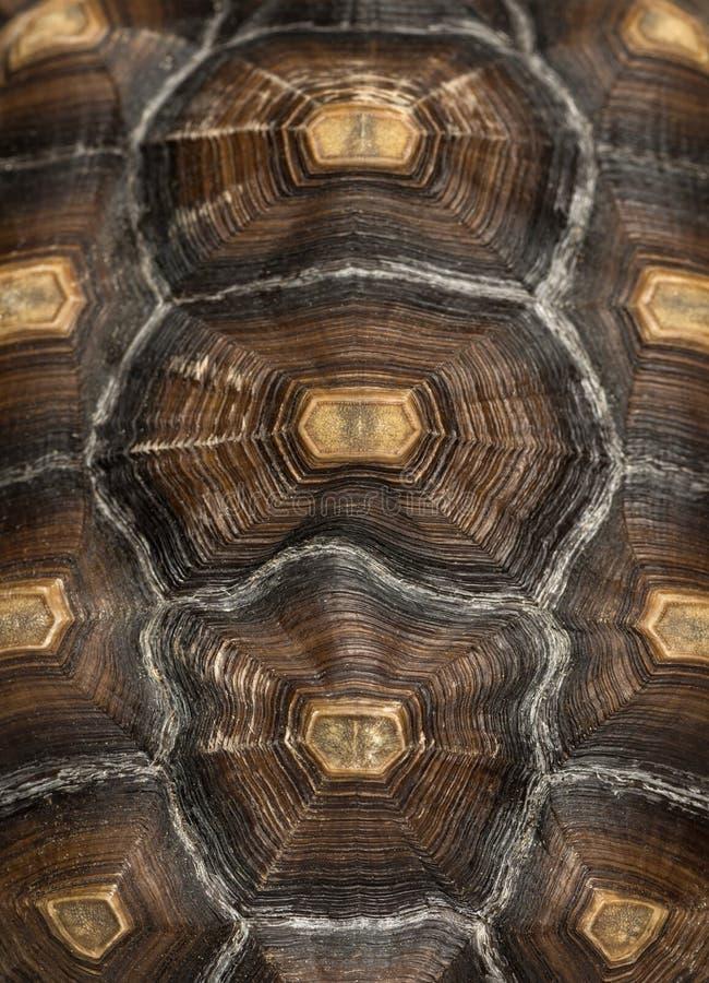 Κινηματογράφηση σε πρώτο πλάνο καβουκιού ενός κεντρισμένου του Αφρικανός Tortoise στοκ φωτογραφία με δικαίωμα ελεύθερης χρήσης