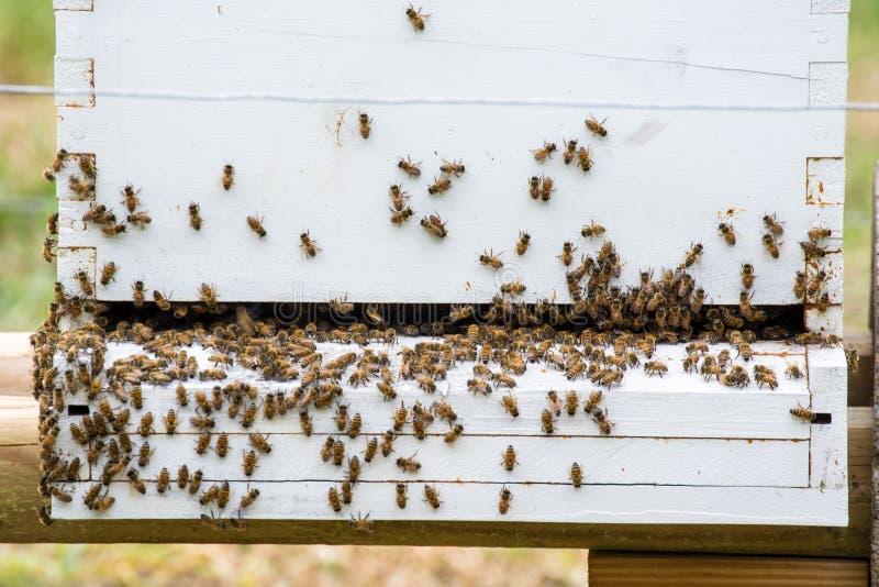 Κινηματογράφηση σε πρώτο πλάνο μιας κυψέλης μελισσών στοκ εικόνες με δικαίωμα ελεύθερης χρήσης