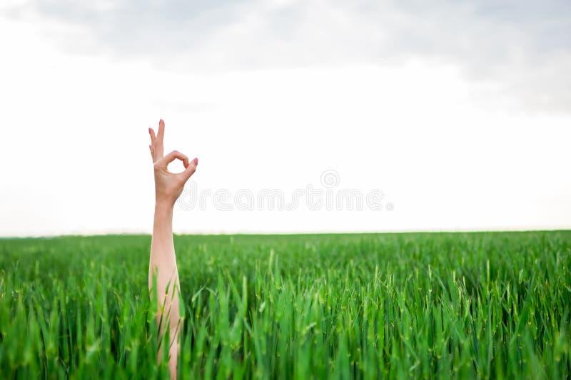 Κινηματογράφηση σε πρώτο πλάνο παραγωγής χεριών μιας γυναίκας εντάξει ή μηδέ σημαδιού στοκ φωτογραφία