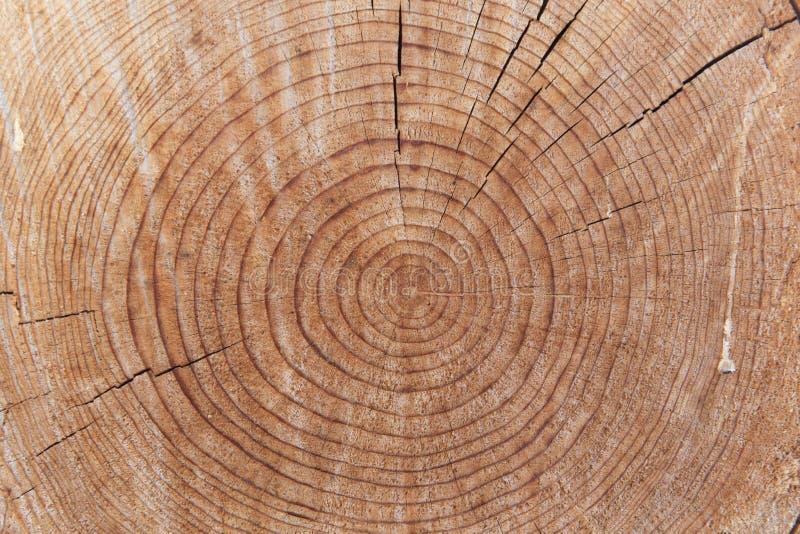 Κινηματογράφηση σε πρώτο πλάνο του ηλικίας ξύλινου κορμού περικοπών στοκ εικόνα με δικαίωμα ελεύθερης χρήσης