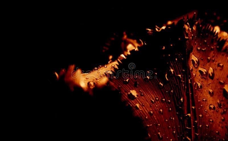 Κινηματογράφηση σε πρώτο πλάνο τουλιπών στοκ φωτογραφίες