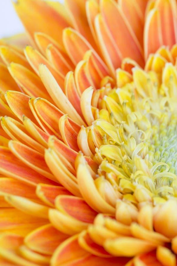 Κινηματογράφηση σε πρώτο πλάνο του κίτρινου λουλουδιού στοκ φωτογραφία με δικαίωμα ελεύθερης χρήσης