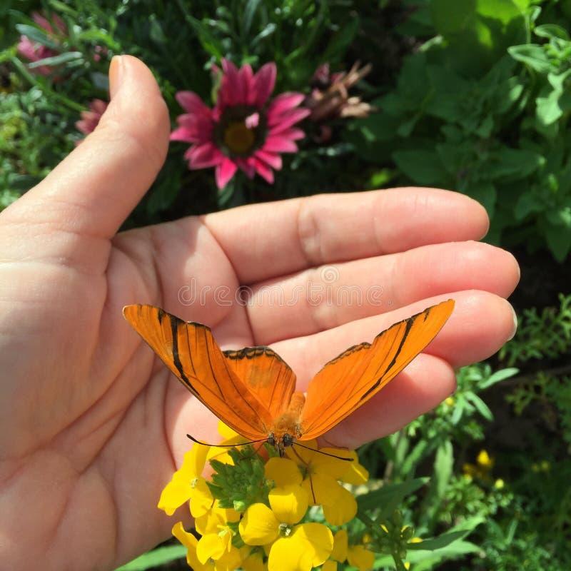 Κινηματογράφηση σε πρώτο πλάνο του χεριού με την πεταλούδα στοκ φωτογραφία με δικαίωμα ελεύθερης χρήσης