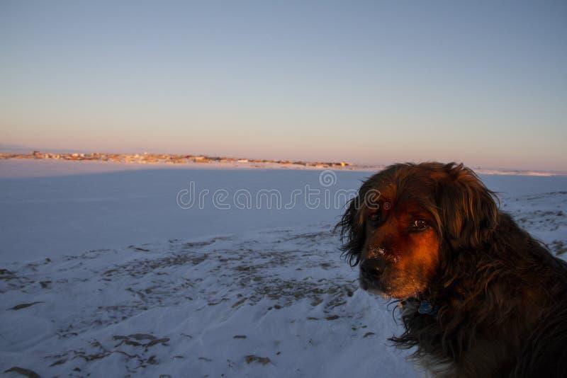 Κινηματογράφηση σε πρώτο πλάνο του όμορφου σκυλιού στοκ φωτογραφία με δικαίωμα ελεύθερης χρήσης