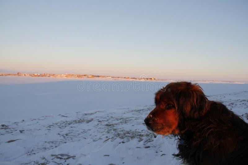 Κινηματογράφηση σε πρώτο πλάνο του όμορφου σκυλιού στοκ εικόνα