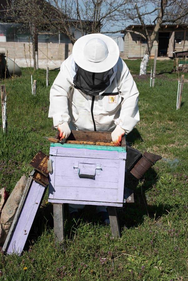 Κινηματογράφηση σε πρώτο πλάνο των μελισσών στην κηρήθρα στο μελισσουργείο στοκ φωτογραφία
