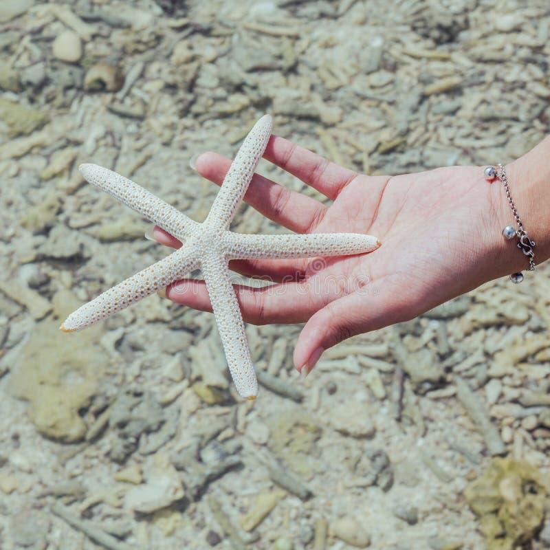 Κινηματογράφηση σε πρώτο πλάνο των ψαριών αστεριών χέρι κοριτσιών στο «s στην τροπική παραλία ταξίδι στοκ εικόνες