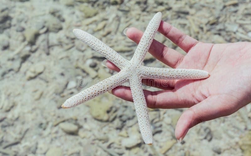 Κινηματογράφηση σε πρώτο πλάνο των ψαριών αστεριών χέρι κοριτσιών στο «s στην τροπική παραλία ταξίδι στοκ φωτογραφία