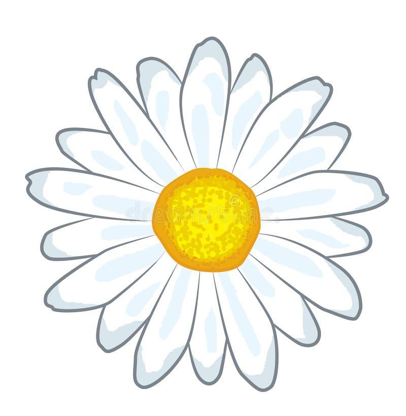 Κινούμενα σχέδια λουλουδιών Chamomile απεικόνιση αποθεμάτων
